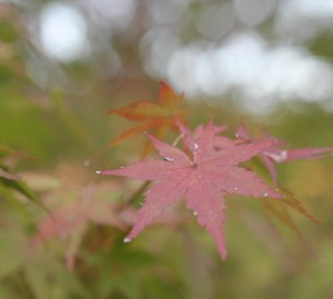 秋らしくなってきました。サクラヒルズでの秋