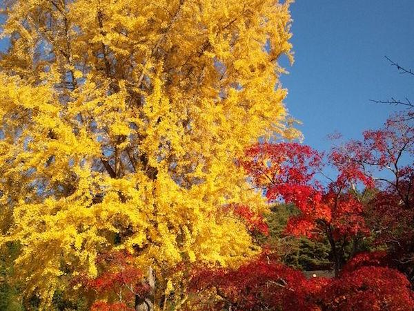 img_autumn05