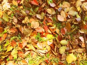 秋の過ごしかた・・・☆