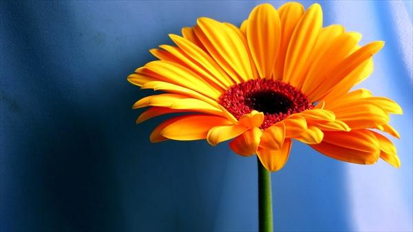img_flower02.jpg