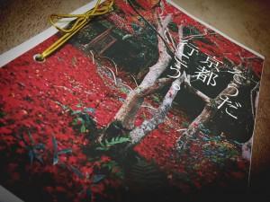 キシコの春物語(2017年版)