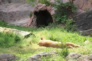 東山動物園へ