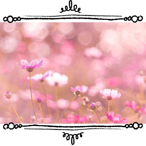【特集】編集部がみつけた♪秋の花・落ち葉アートフォト