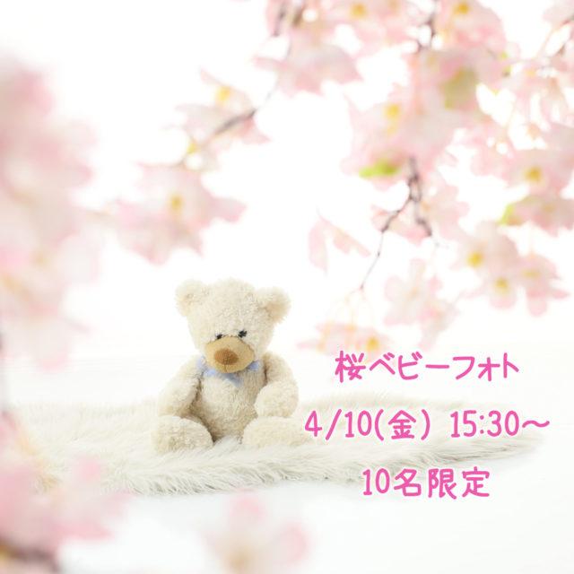 桜ベビーフォト【横須賀スタジオ】