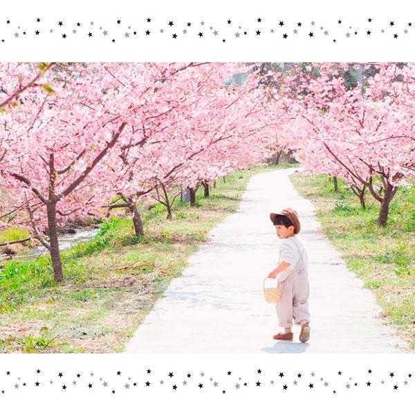 【特集】編集部がみつけた♪桜フォト