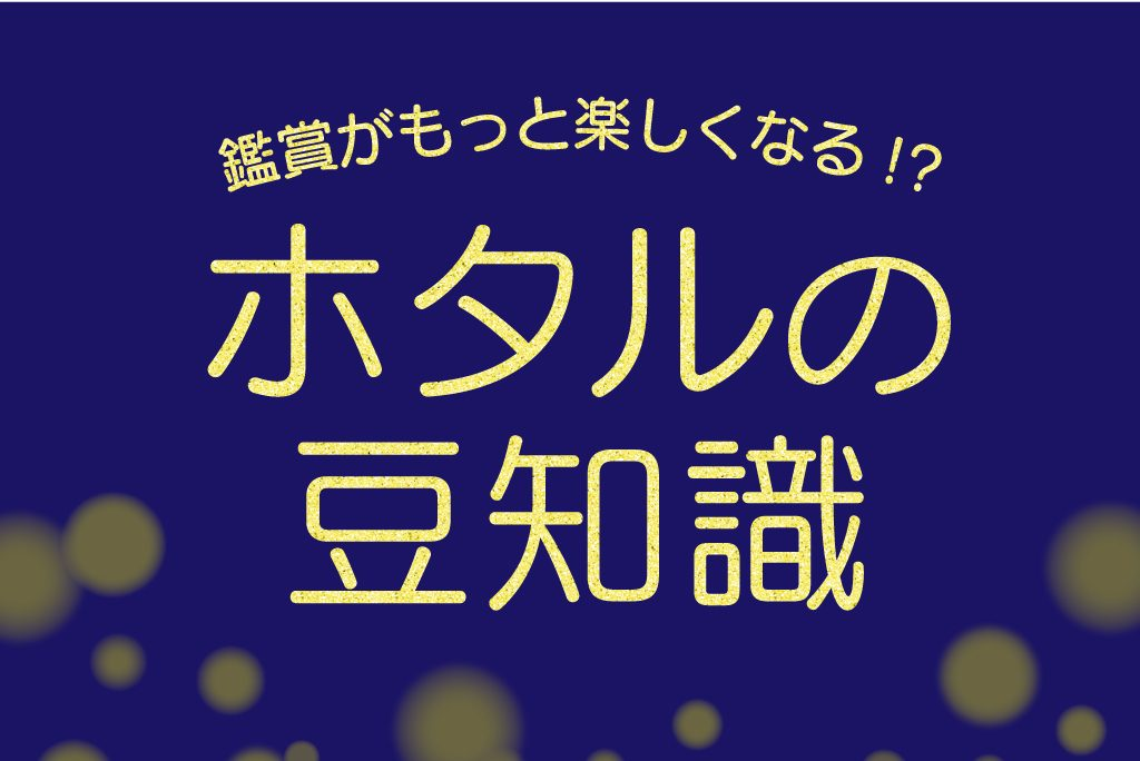 【特集】観賞がもっと楽しくなる!?蛍の豆知識